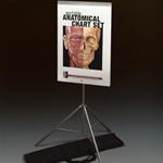 Portable Anatomical Chart Set