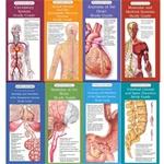 Illustrated Pocket Anatomy